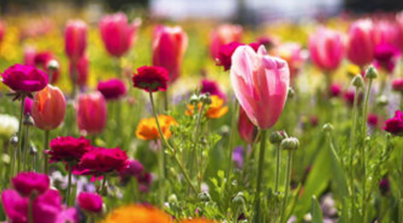 chelsea flower show tickets - chelsea flower show tickets on stubhub!
